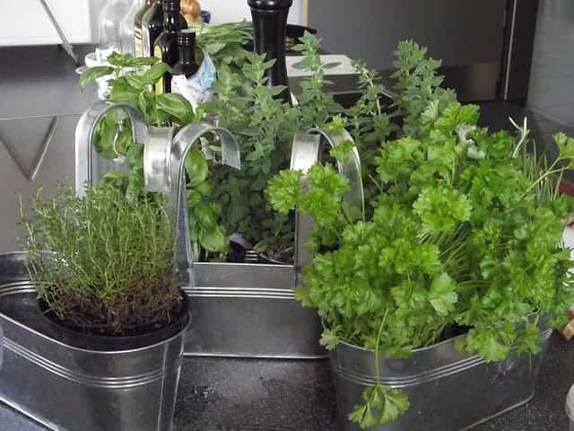 Plantas para la cocina 2