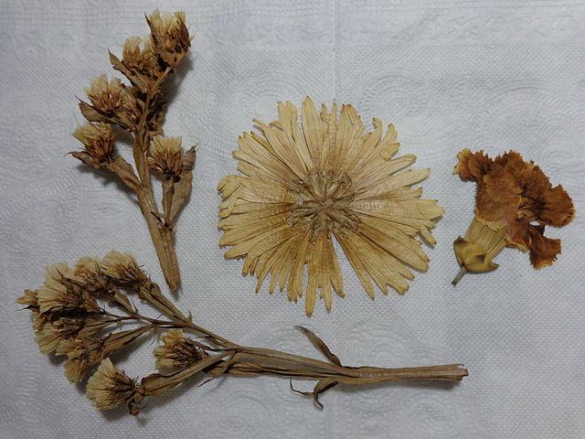 Técnicas para secar flores 2
