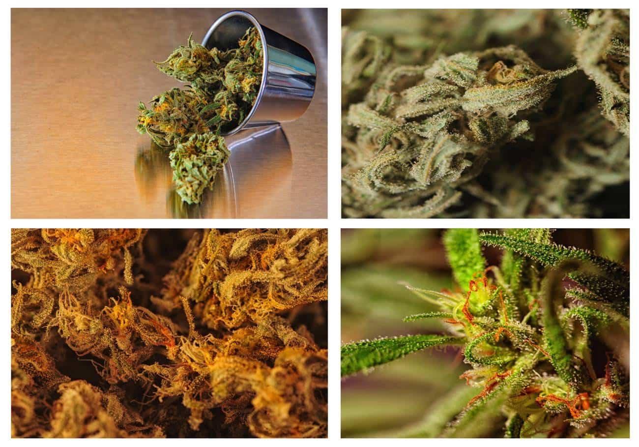 tipos de marihuana