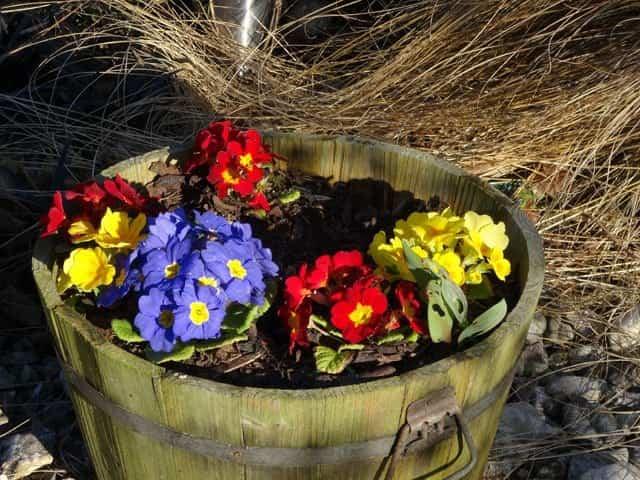 Cuidar las plantas en verano 1