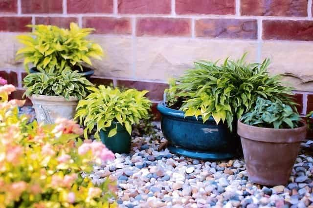Cuidar las plantas en verano 2