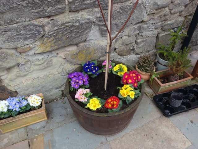 Cuidar las plantas en verano 3