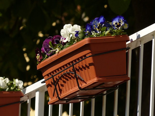 Plantas de verano para el balcón 1