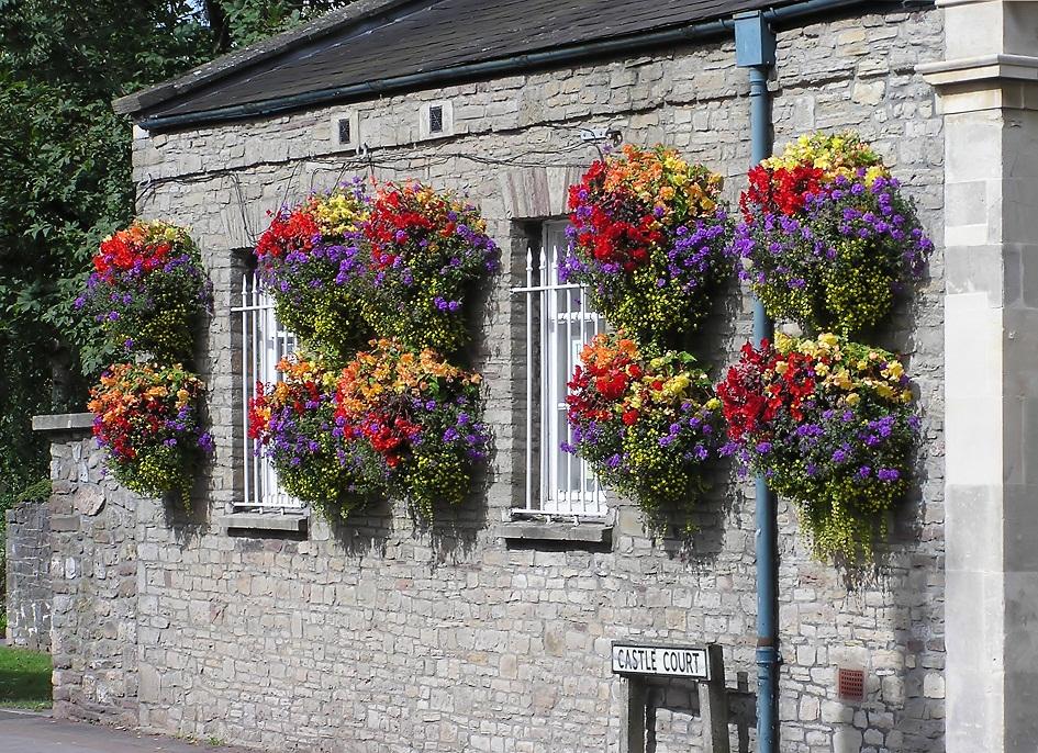 Plantas de verano para el balcón 2