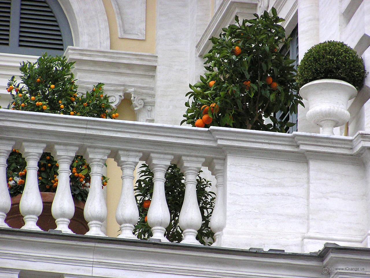 Plantas de verano para el balcón 4