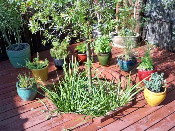 jardin especias