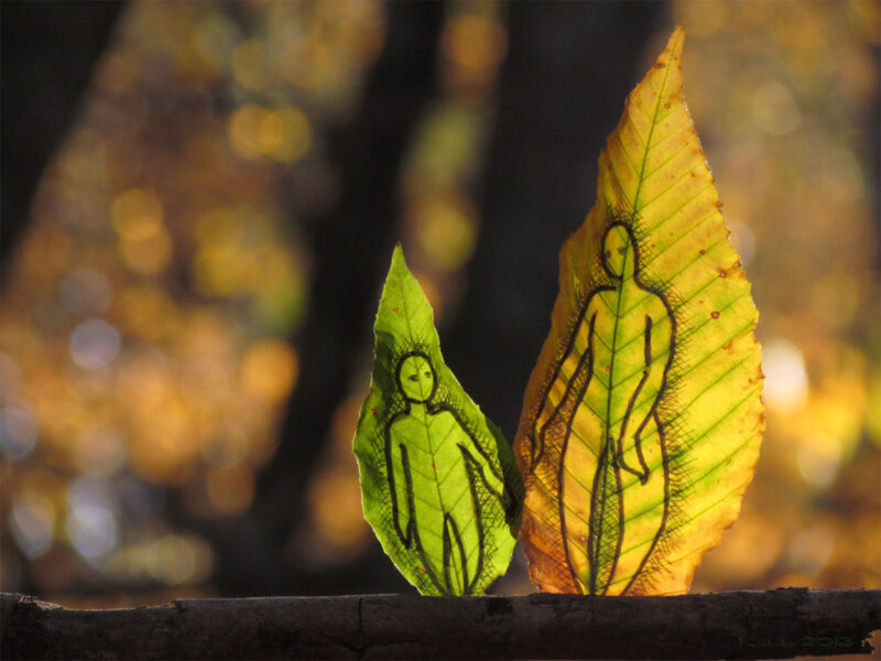 hojas de otoño pintadas