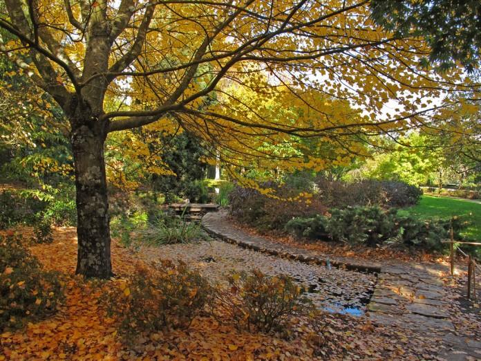 jardin de otono