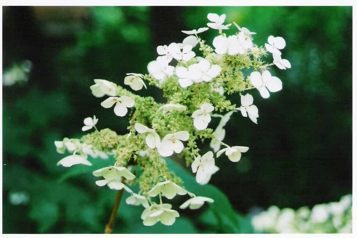 planta de jardín