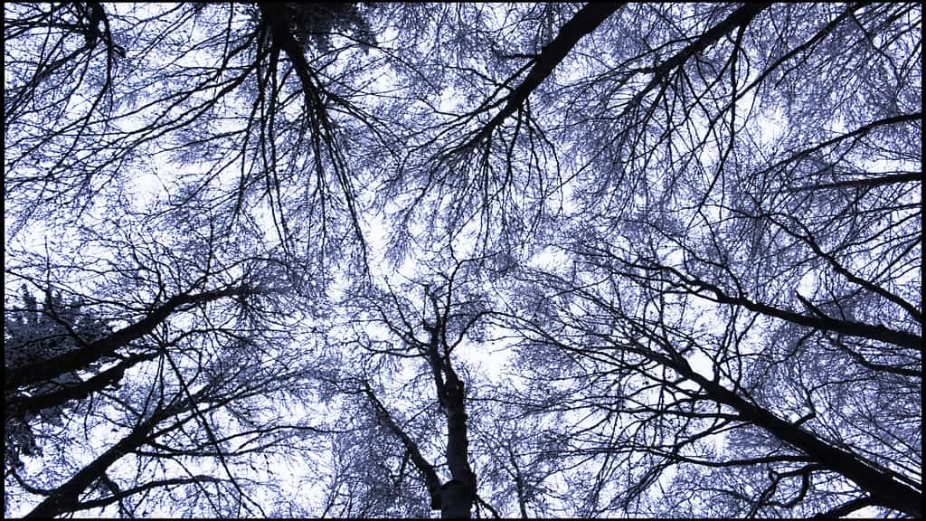 Funcion de los árboles en tu jardín