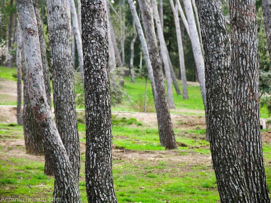 Beneficios de los árboles en tu jardín