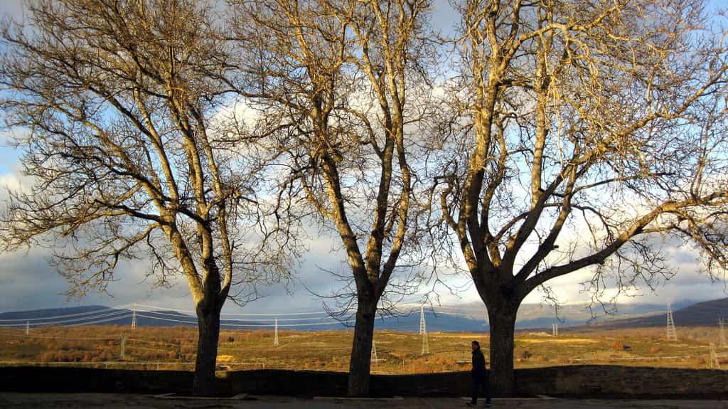 Funciones de los árboles en tu jardín