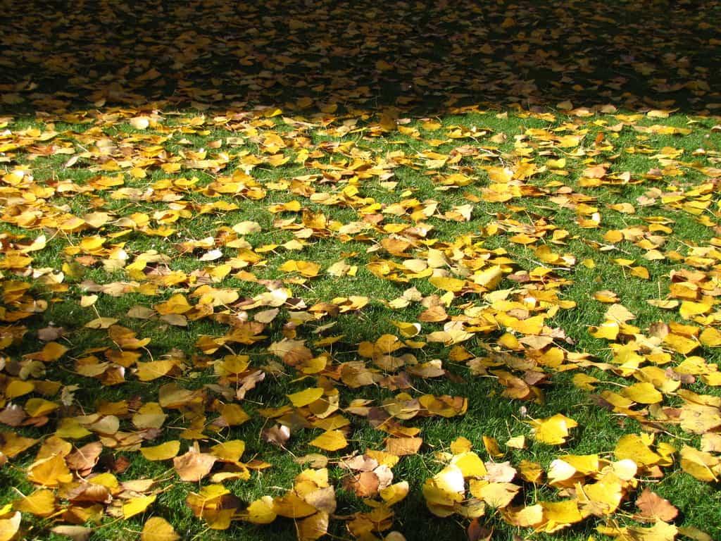 cuidados para el césped para el otoño