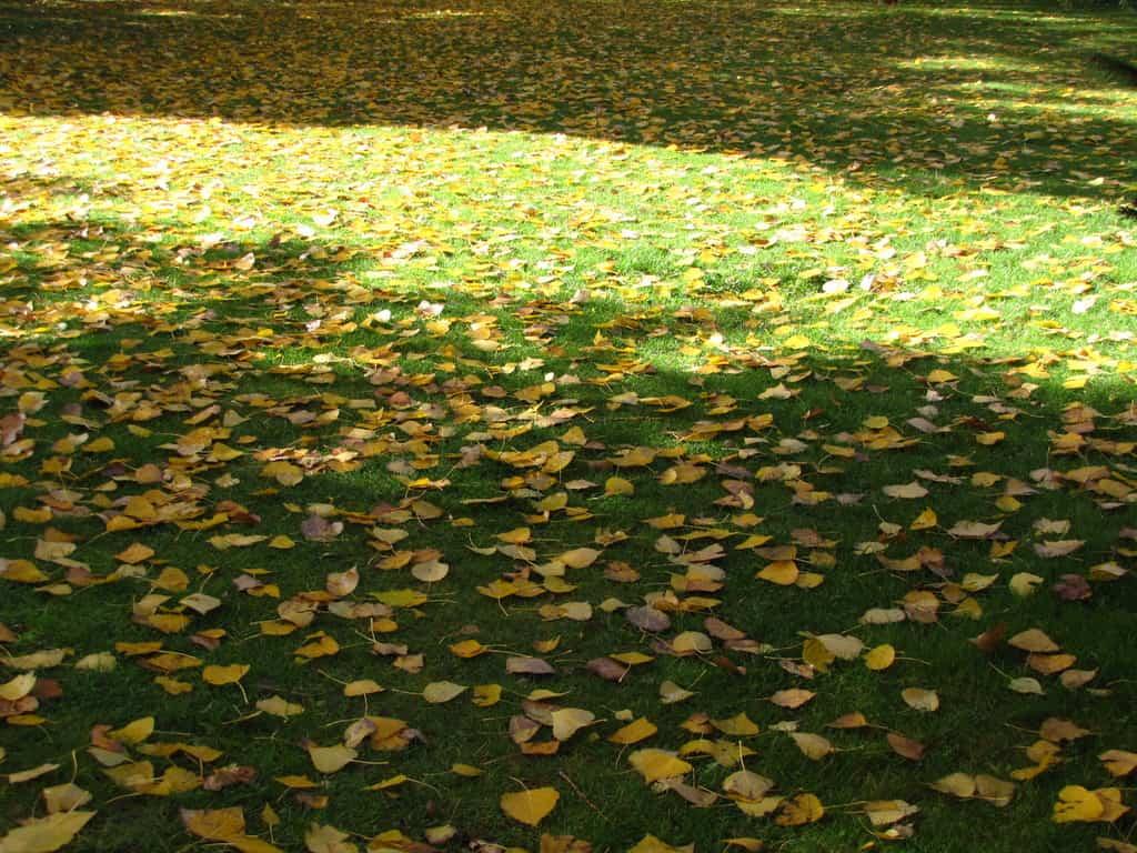 El otoño y los cuidados para el césped