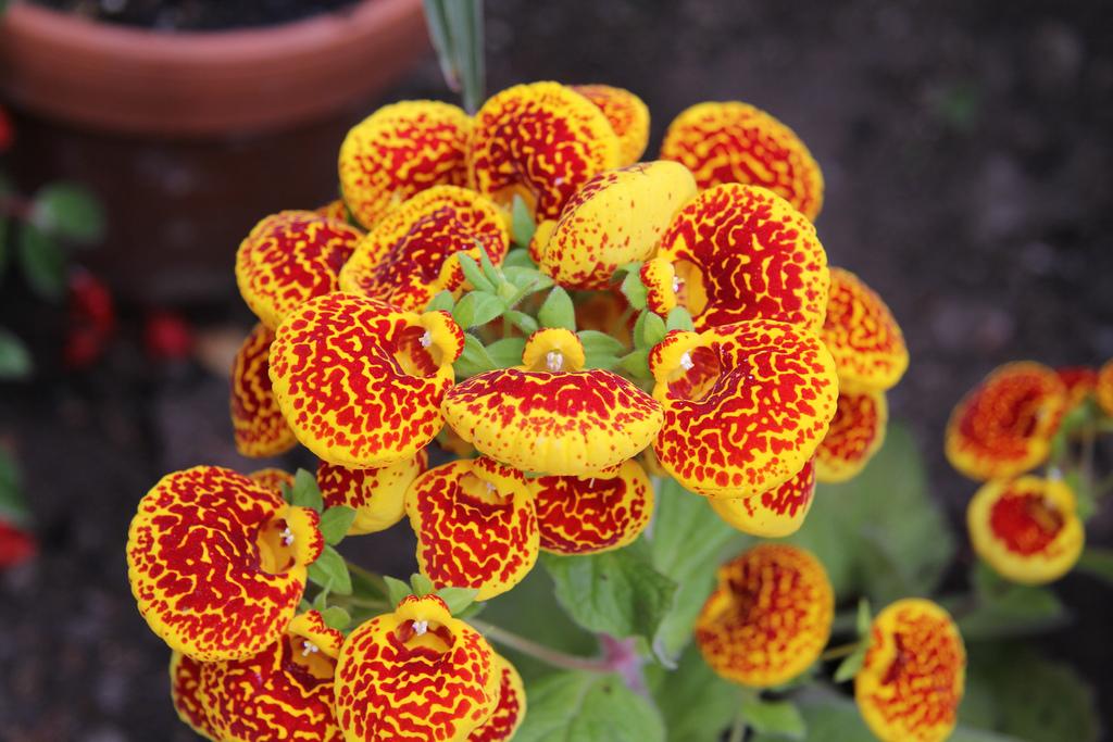 Qué flores florecen en otoño y la forma de cuidarlas