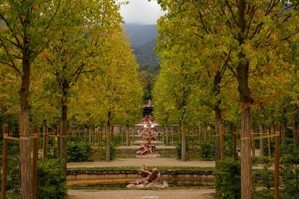 Ideas para diseñar un jardín
