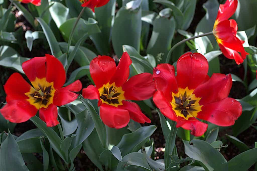 Diferentes herramientas necesarias para tu jardín