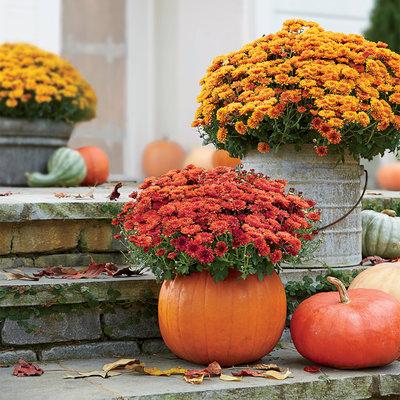 Decorar el jardín en otoño