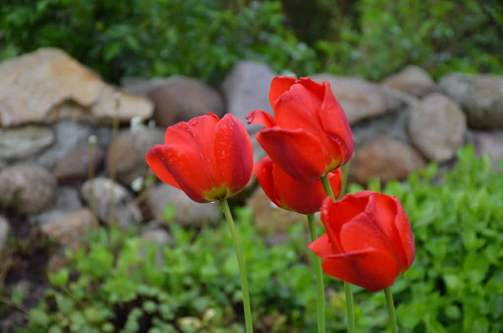 Diferentes plantas bulbosas