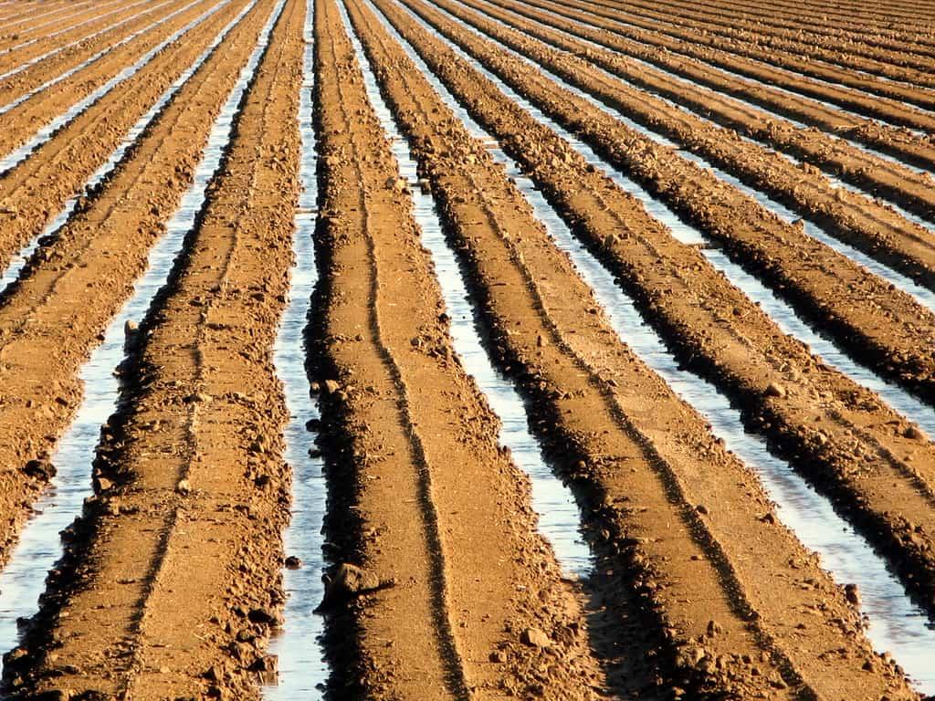 Diferentes las propiedades del suelo