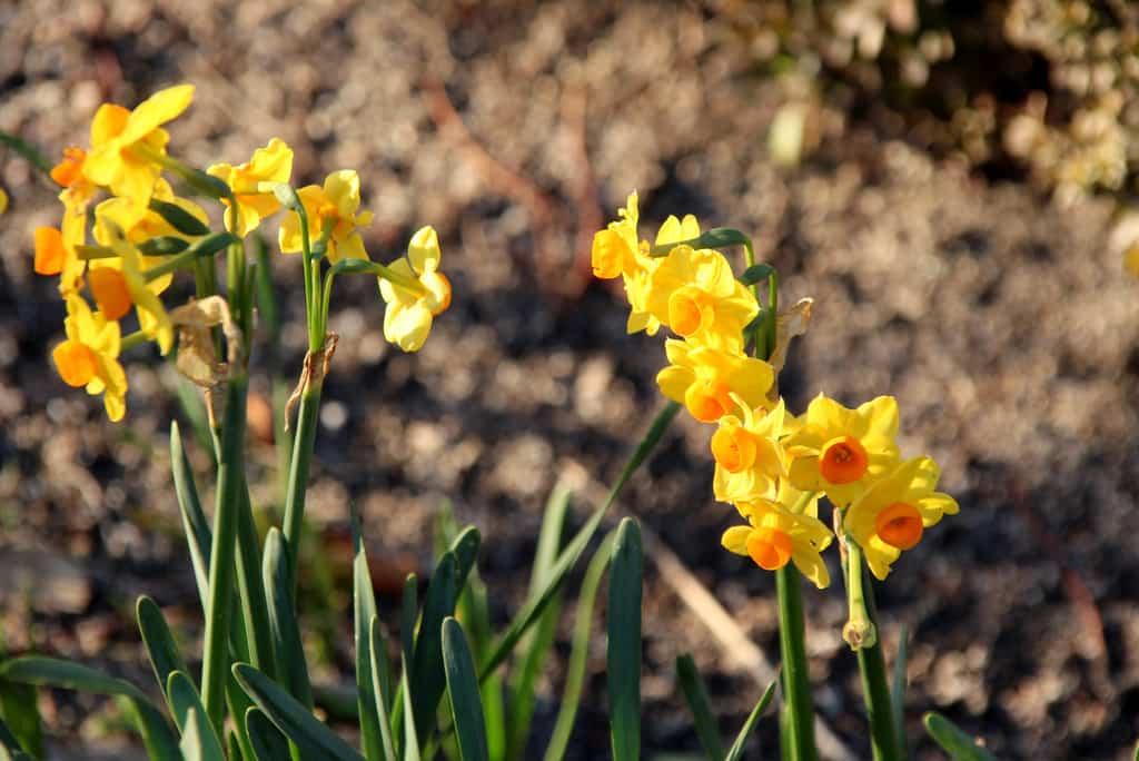 Cuidados del jardín en febrero