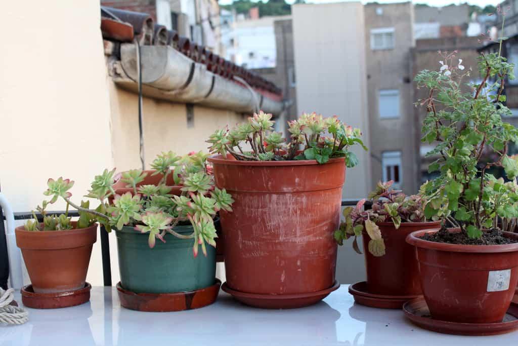 Cómo diseñar un jardín pequeño