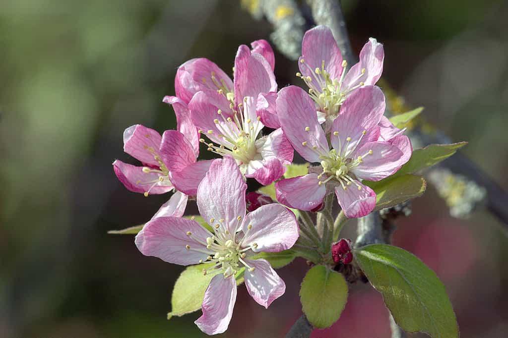 Consejos para el cultivo de árboles frutales