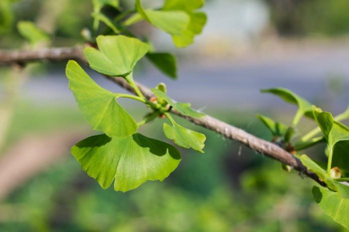 Cultivo de plantas para suelos húmedos