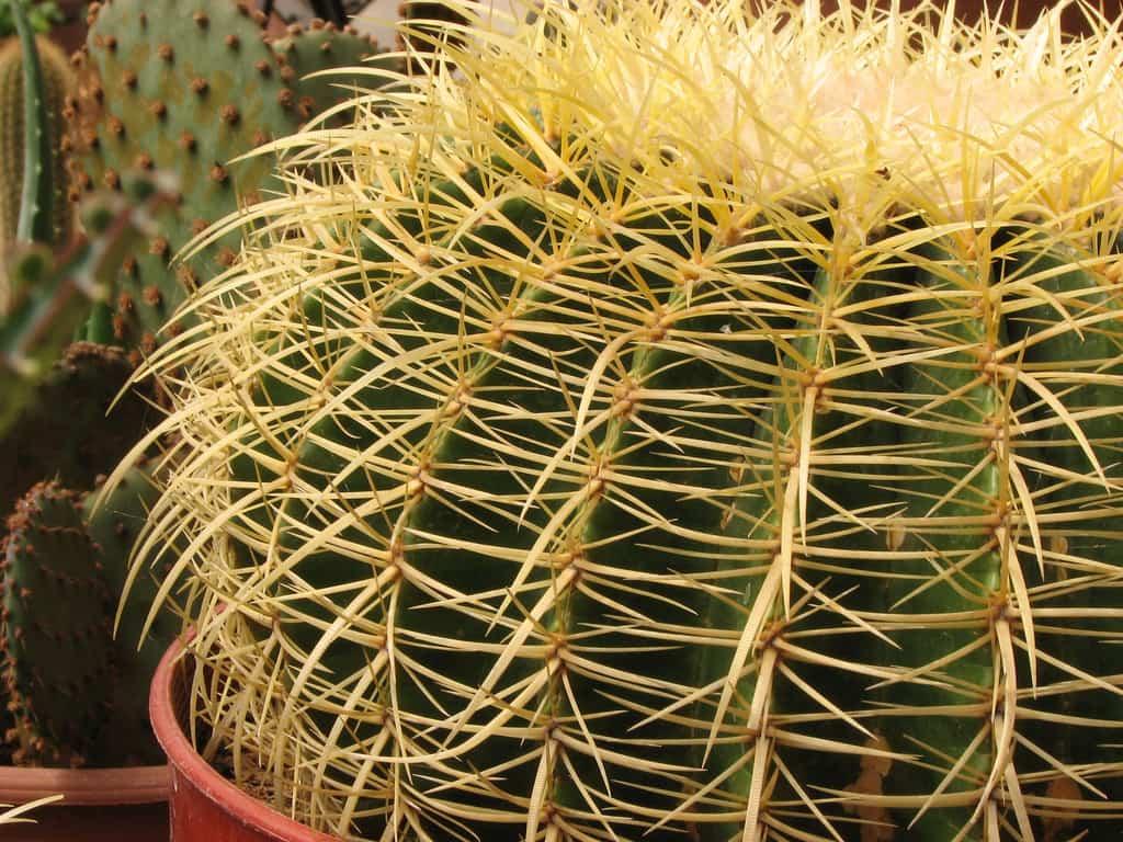 Cómo cuidar cactus y suculentas