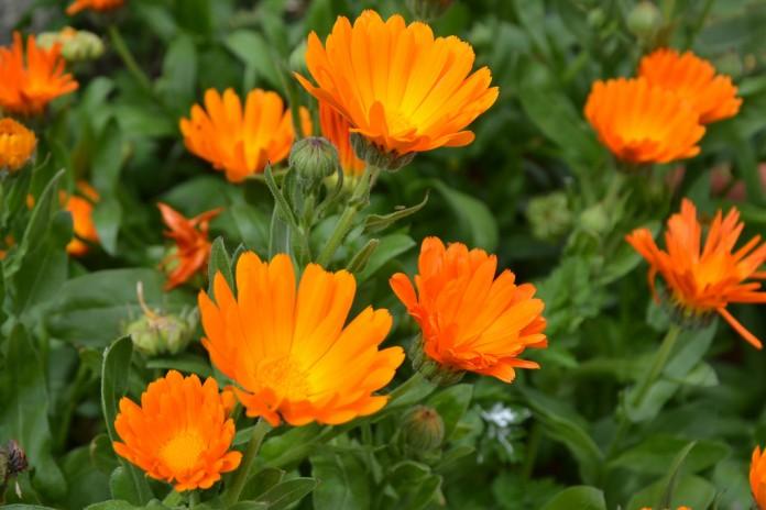 Especies para cultivar en primavera