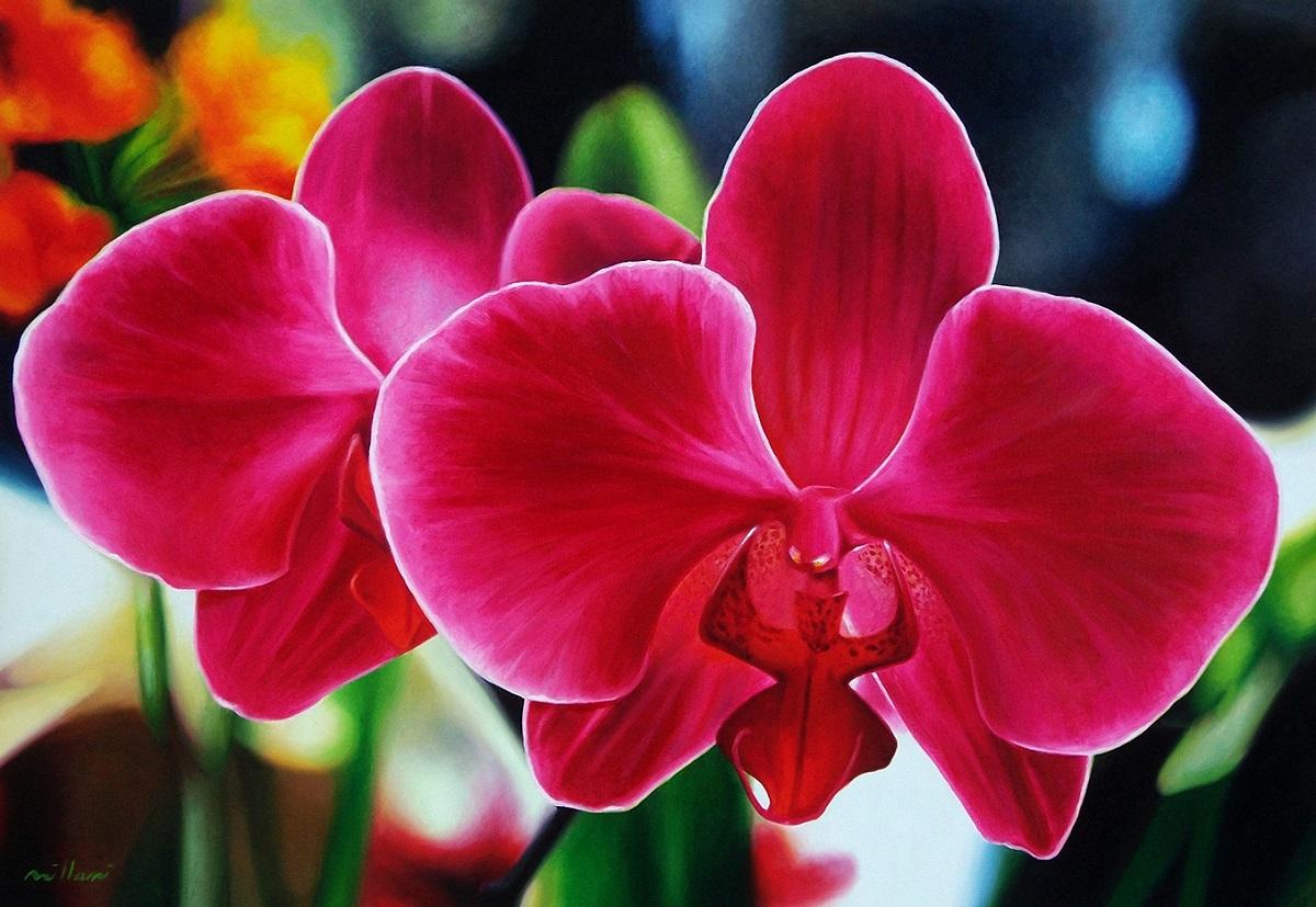 cuidados de la orquídea