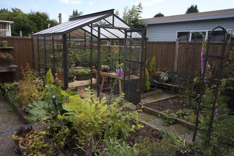 cultivo de invernadero