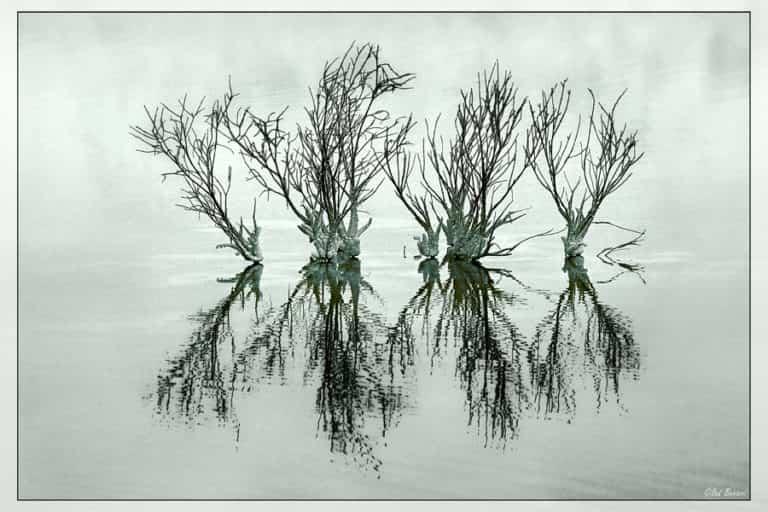 Exceso de riego: ¿cómo saber si una planta tiene mucha agua?