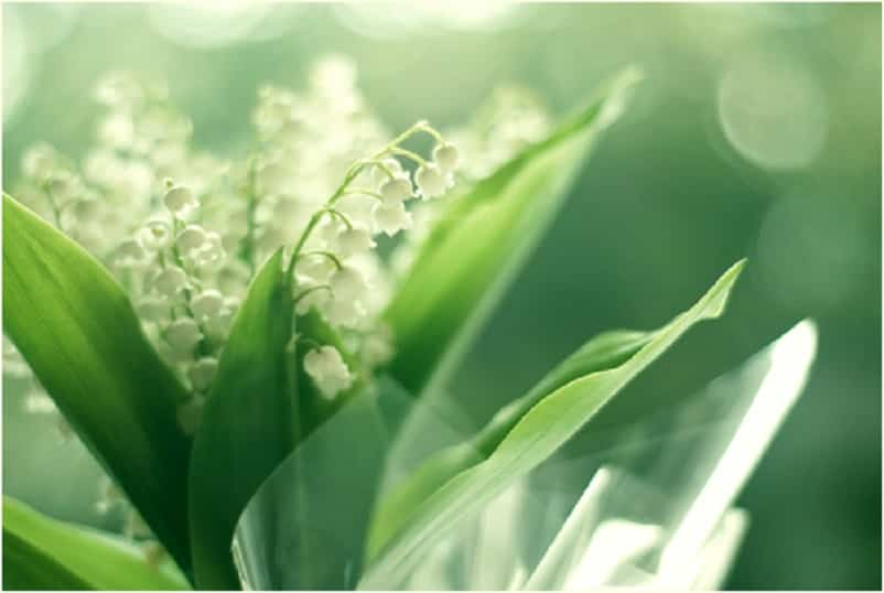 planta enferma