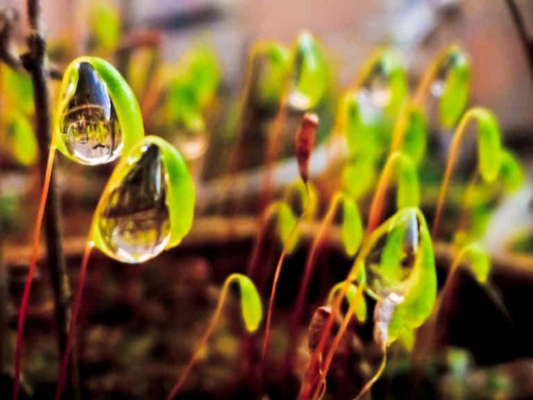 10 posibles causas de tener una planta enferma