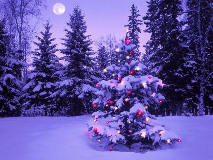 luces para el árbol de Navidad