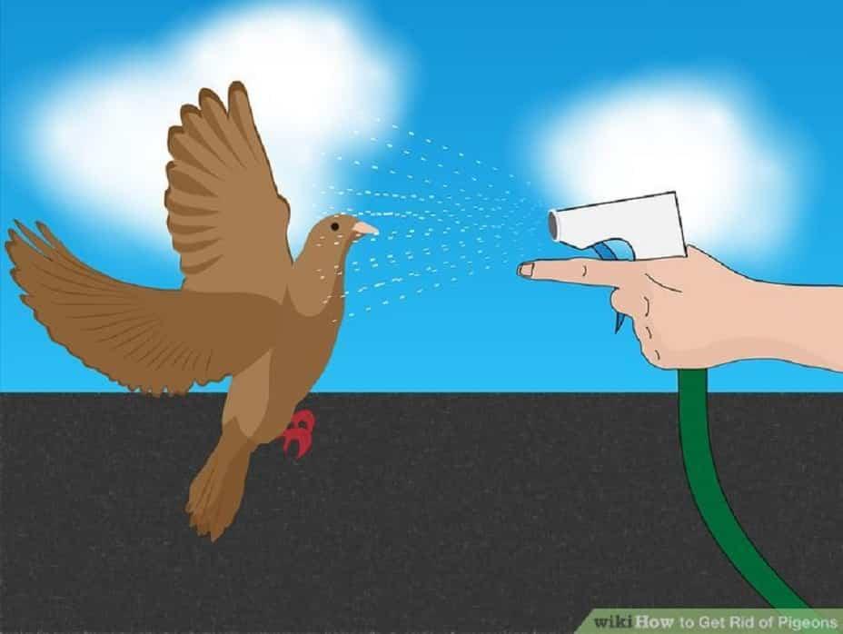 ahuyentar palomas