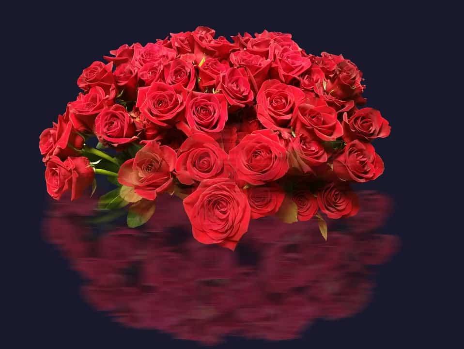 ramo rosas rojas para la pareja