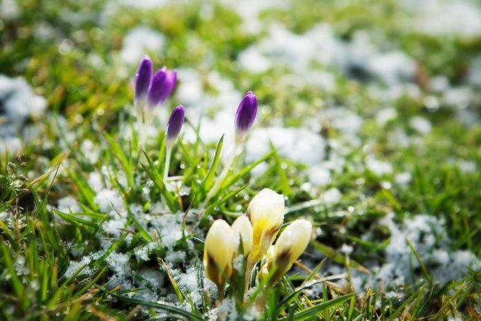 jardin en invierno