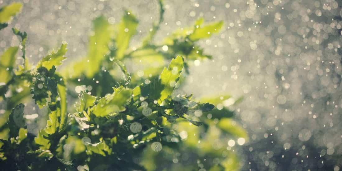 proteger el jardín de fuertes lluvias