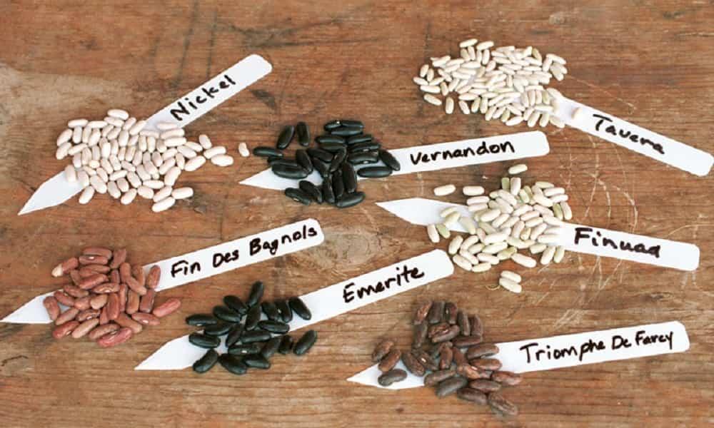 semillas de la huerta
