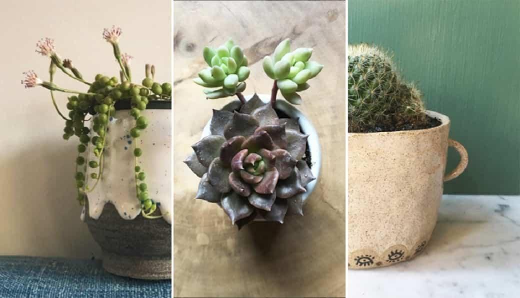 cuidar los cactus en primavera