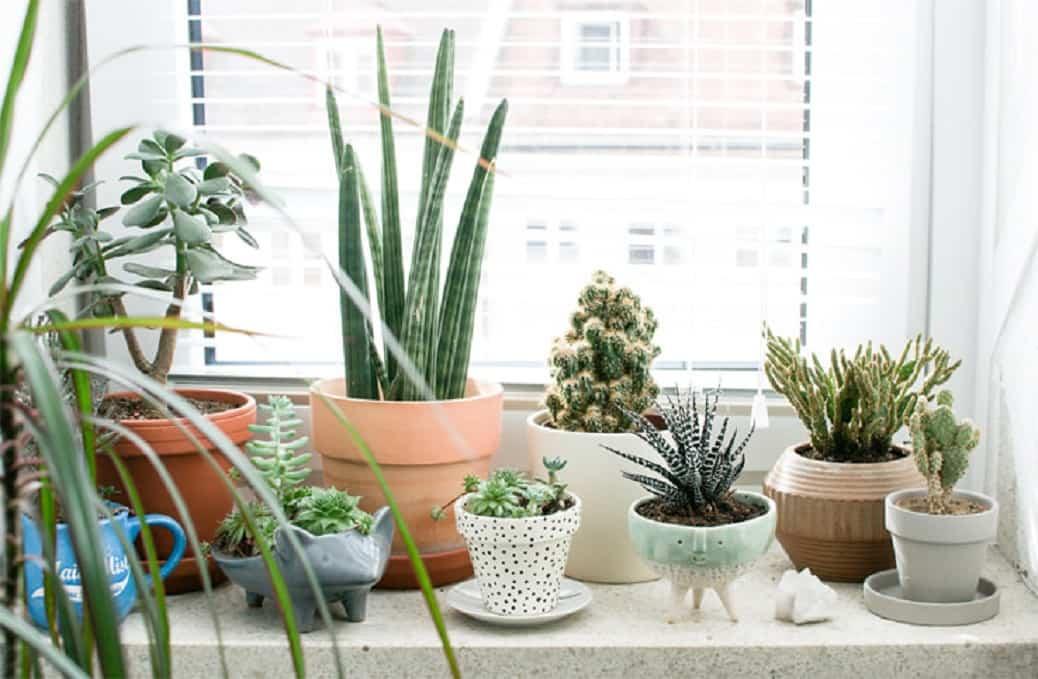 limpiar las plantas en verano