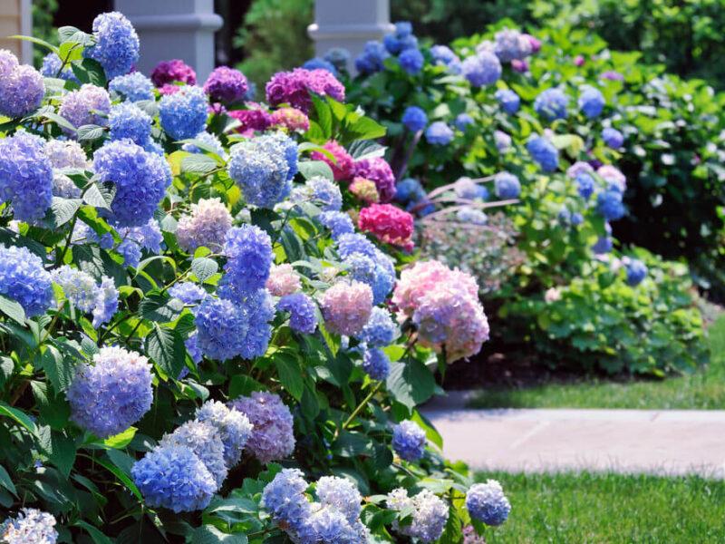flores para zonas de sombra