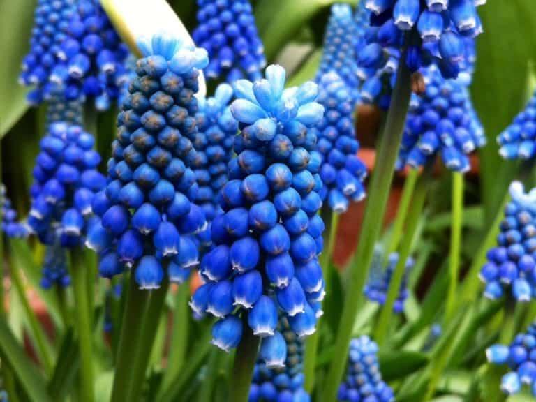 Flores azules para decorar el jardín. ¿Eres un amante de este color?