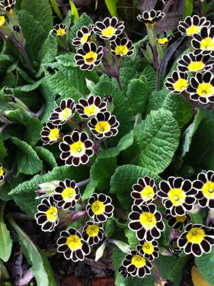 flores en color negro para decorar