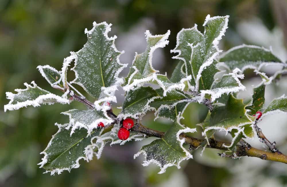 cuidar el jardín en invierno