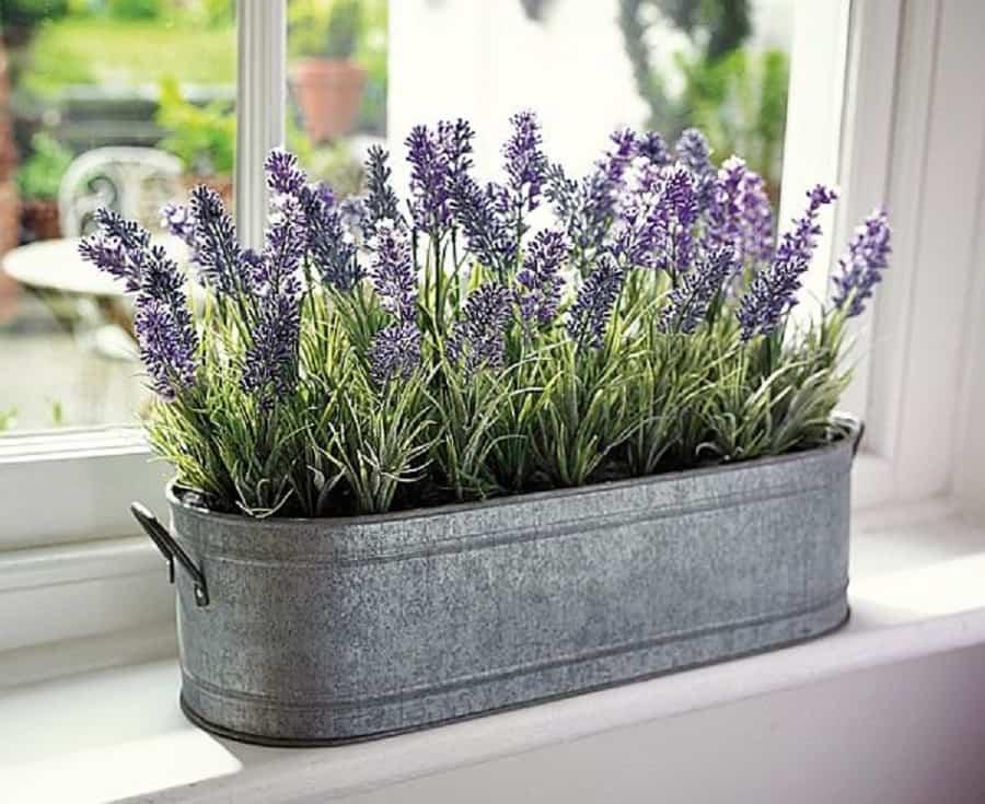 plantas de interior en invierno