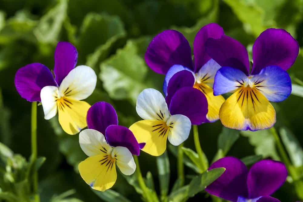 plantas de invierno jardin 1
