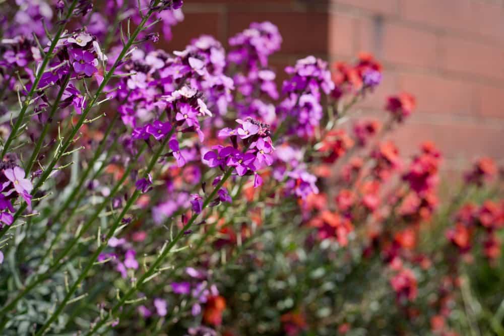 plantas de invierno jardin 2